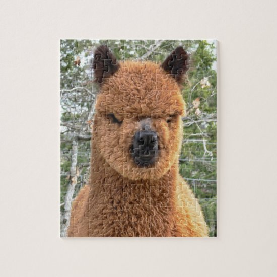 Alpaca Puzzle Before Shearing