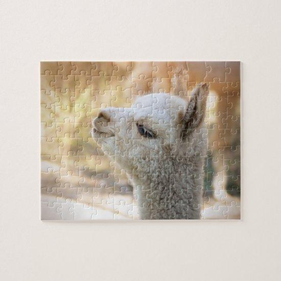 Alpaca Puzzle Celeste