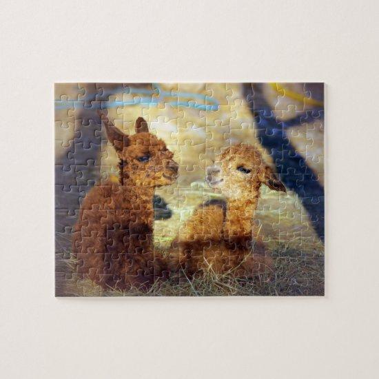 Alpaca Puzzle Crias