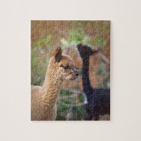 Alpaca Puzzle Farren