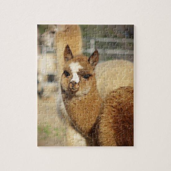 Alpaca Puzzle Juju