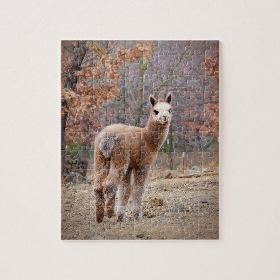 Alpaca Puzzle Rossi