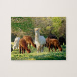 "Alpaca Puzzle with Gift Box<br><div class=""desc"">Our Alpacas Photo Puzzle was taken one afternoon on our farm.  The alpaca in the middle of the photo is Sleigh Belle.  She is a beautiful female alpaca.  I thought this picture would make a great puzzle and a wonderful gift for someone special.</div>"