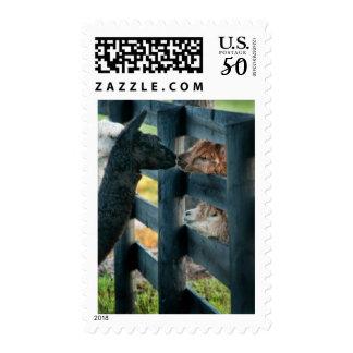 Alpaca Stamp