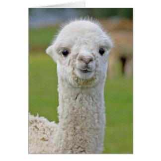 Alpaca stink eye cards