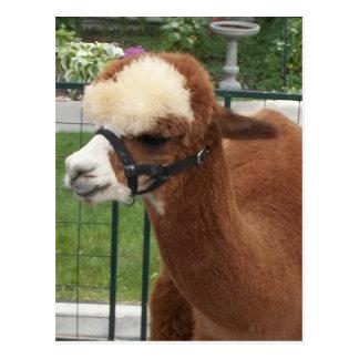 Alpaca Tarjetas Postales