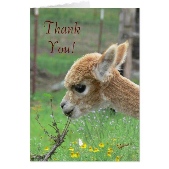 Alpaca Thank You Card