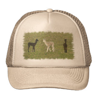 Alpaca Trio Trucker Hat