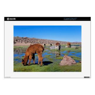 "Alpaca (Vicugna Pacos) Grazing In Their Chilean Skin For 15"" Laptop"