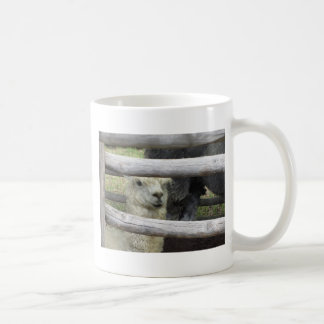 Alpaca ( Vicugna pacos ) looking out wooden fence Coffee Mug