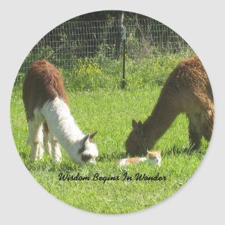 Alpaca Wisdom Begins In Wonder Classic Round Sticker
