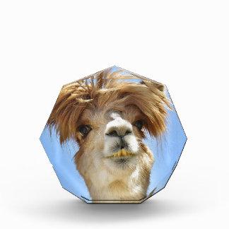Alpaca with Crazy Hair Acrylic Award