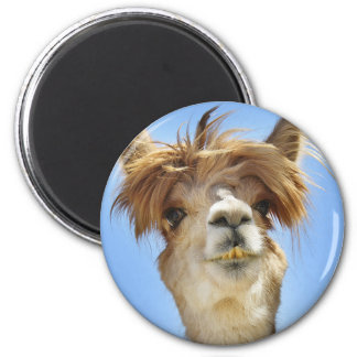 Alpaca with Crazy Hair Magnet
