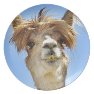 Alpaca with Crazy Hair Plate