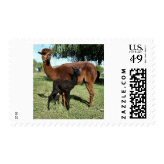 Alpaca y Cria Sellos Postales