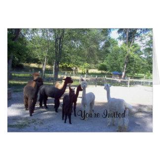 alpaca  You're Invited Card
