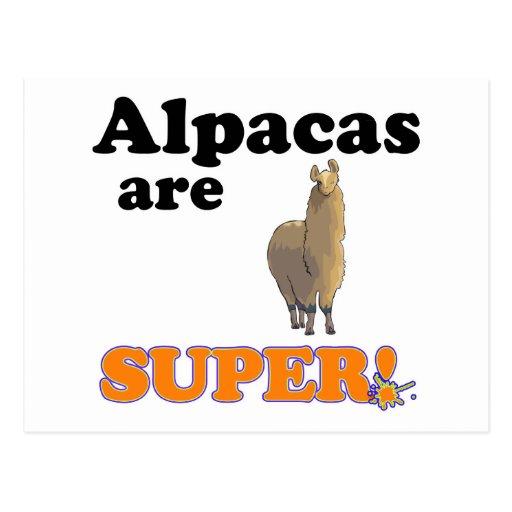 alpacas are super postcard