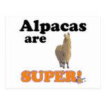alpacas are super postcards