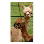 Alpacas Double-Sided Standard Business Cards (Pack Of 100)