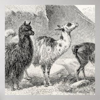 Alpacas de las llamas de la plantilla de la alpaca impresiones