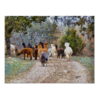 Alpacas Digital Painting Print