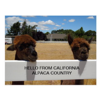 Alpacas en Templeton, California Tarjeta Postal