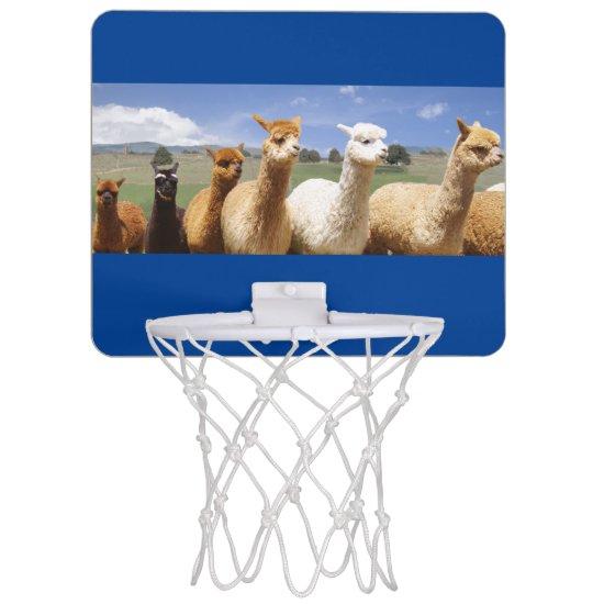 Alpacas Goal Mini Basketball Backboard
