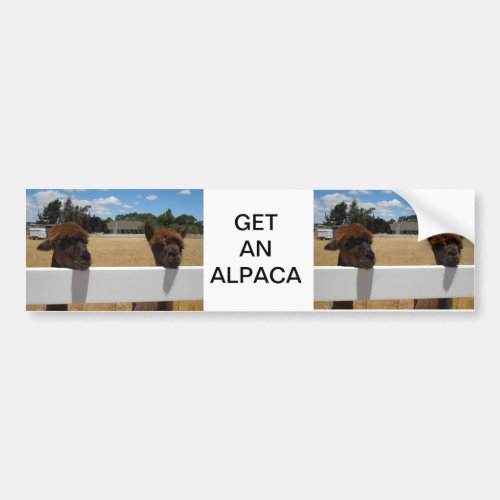 Alpacas in Templeton, California Bumper Sticker