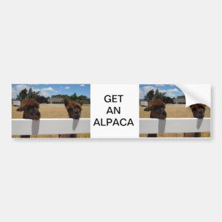 Alpacas in Templeton, California Car Bumper Sticker