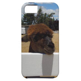 Alpacas in Templeton, California iPhone 5 Cases
