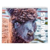 Alpacas Wall Calendar