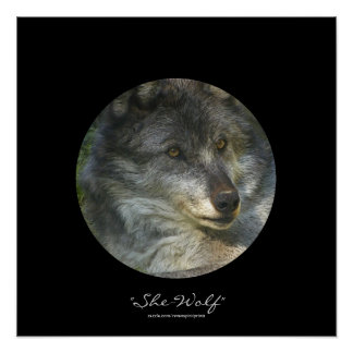 Alpha Female Grey Wolf Wildlife-Support Poster