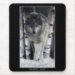 Alpha Grey Wolf & Winter Birch Trees Mousepads