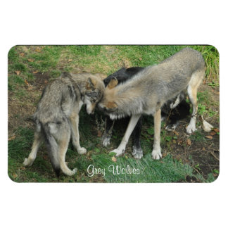 Alpha Male, Female Grey Wolf & Pup Wildlife Magnet