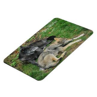 Alpha Male Grey Wolf & Pup Wildlife Photo Magnet