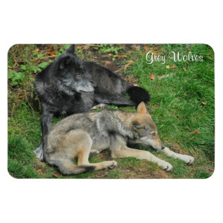 Alpha Male Grey Wolf & Pup Wildlife Photo Magnet