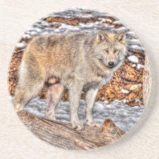 Alpha Male Grey Wolf Wildlife Photo Drink Coaster
