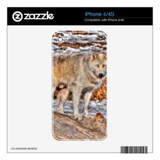 Alpha Male Grey Wolf Wildlife Photo iPhone 4 Decal
