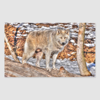Alpha Male Grey Wolf Wildlife Photo Rectangular Sticker