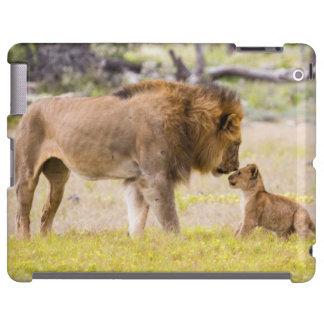 Alpha male lion inspects cub