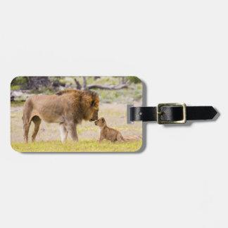Alpha male lion inspects cub bag tag