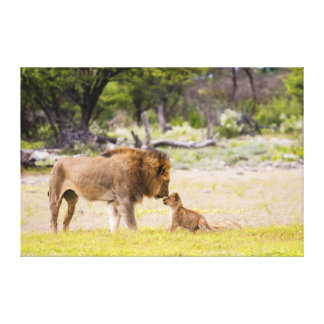 Alpha male lion inspects cub gallery wrap canvas