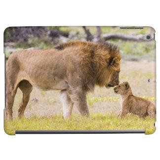Alpha male lion inspects cub iPad air cases