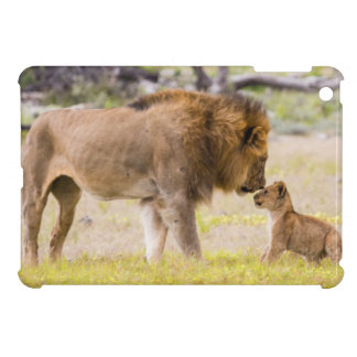 Alpha male lion inspects cub iPad mini cases