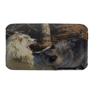 Alpha Male Wolf Challenge Battling Wolves iPhone 3 Case