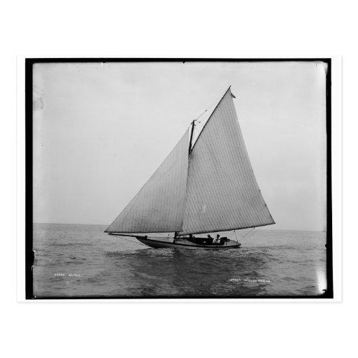 Alpha Sailing Yacht 1892 Postcard