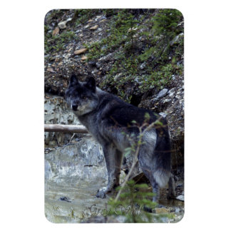 Alpha Wolf & Canyon Creek Wildlife Photo Magnet