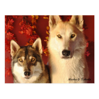 Alpha Wolves Fall Postcards