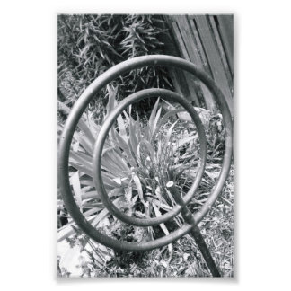 Alphabet Letter Photography Q1 Black and White 4x6 Photo Print