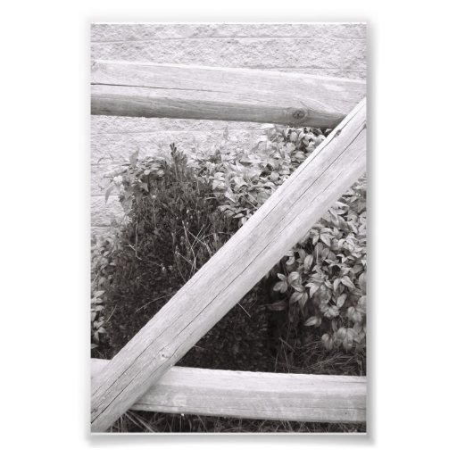Alphabet Letter Photography Z2 Black and White 4x6 Photograph